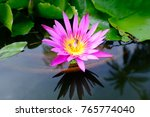 lotus in the pond | Shutterstock . vector #765774040