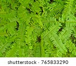 green fern background  | Shutterstock . vector #765833290