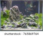 aquarium with professional