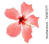 flower  pink hibiscus  in drops ... | Shutterstock . vector #76587277