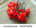 Red Ripe Viburnum  Kalina In...