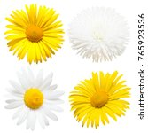 Collection Of Beautiful Daisy...