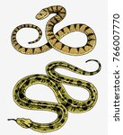 viper snake. serpent cobra and...   Shutterstock .eps vector #766007770