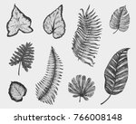 tropical or exotic leaves  leaf ... | Shutterstock .eps vector #766008148