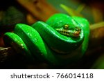 close up portrait a green snake ... | Shutterstock . vector #766014118