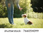 Stock photo girl to train a small dog people with a pet together funny and clever jack russell terrier 766054099