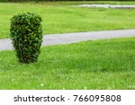 clipped green bush on the...