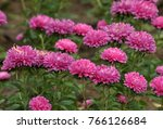on the flowerbed in the autumn... | Shutterstock . vector #766126684
