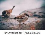 Close Up Photo Of A Sparrow...