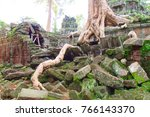 the ceiba tree  cotton tree  in ... | Shutterstock . vector #766143370