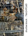 live hens in cages for sale.... | Shutterstock . vector #766149160