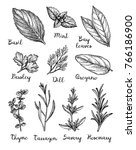 herbs set. collection of ink... | Shutterstock .eps vector #766186900