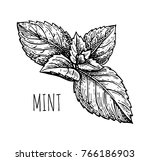 ink sketch of mint. isolated on ... | Shutterstock .eps vector #766186903