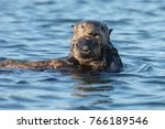 mother and baby sea otter   Shutterstock . vector #766189546