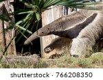 giant anteater  myrmecophaga... | Shutterstock . vector #766208350