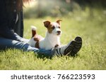 Stock photo girl with dog play person and pet together a little jack russell terrier 766223593