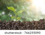 plant  garden  growing. | Shutterstock . vector #766255090