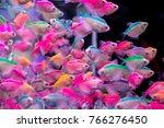 School Of Colorful Siamese...
