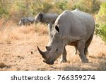close up of a white rhino in a... | Shutterstock . vector #766359274