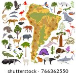south america flora and fauna... | Shutterstock .eps vector #766362550