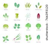 salad ingredients. leafy... | Shutterstock . vector #766393120