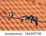 Small photo of Swallows alighted on an electric wire in autumn before a flight to the south