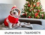 Dog With Christmas Sugar Candy...