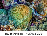 close up of stony coral ... | Shutterstock . vector #766416223