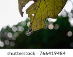 Small photo of leaf perforated cobweb adhere on bokeh background