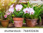 Orchids Flower In Clay Pots In...
