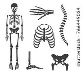 vector illustration parts of... | Shutterstock .eps vector #766449034