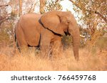 wild african elephant in a game ... | Shutterstock . vector #766459768