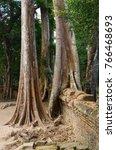 giant banyan trees growing on...   Shutterstock . vector #766468693