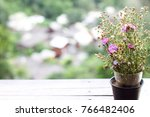 flowers in the pot at the... | Shutterstock . vector #766482406