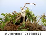 birds in isla de la plata ... | Shutterstock . vector #766485598