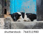 large black and white dog... | Shutterstock . vector #766511980