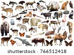 collection of different birds ... | Shutterstock . vector #766512418