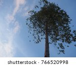 trees for agriculture and paper ... | Shutterstock . vector #766520998