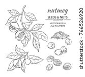 nutmeg branches vector set on... | Shutterstock .eps vector #766526920