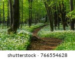 wild spring fairy forest with... | Shutterstock . vector #766554628
