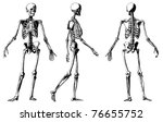 Vector Skeleton From Atlas...