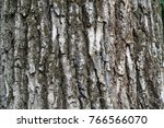 Small photo of Dry greyish brown bark of old tree