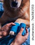 girl putting bandage on injured ...   Shutterstock . vector #766581553