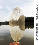 Small photo of A hand holding translucent leaf with river background. Art of nature and here is the doctrine teach people to accepted the real things stay with present situation, positive thinking and stay strong.