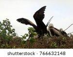 huge birds in isla de la plata  ... | Shutterstock . vector #766632148