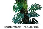 green leaves of monstera or... | Shutterstock . vector #766680106