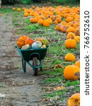 Pumpkins In A Wheelbarrow In A...