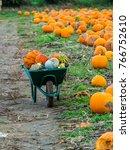 Pumpkins In A Wheelbarrow In A...