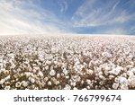 beautiful cotton fields from... | Shutterstock . vector #766799674