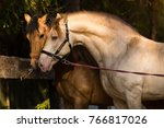 stallion in mare in mating... | Shutterstock . vector #766817026